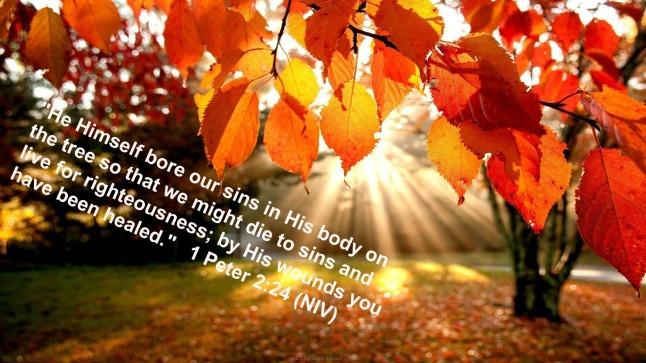 Fall_image blog